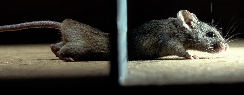 Banner Hubspot mouse under door