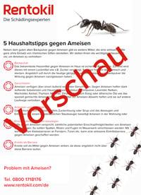 Info - Ameisen Haushaltstipps-1